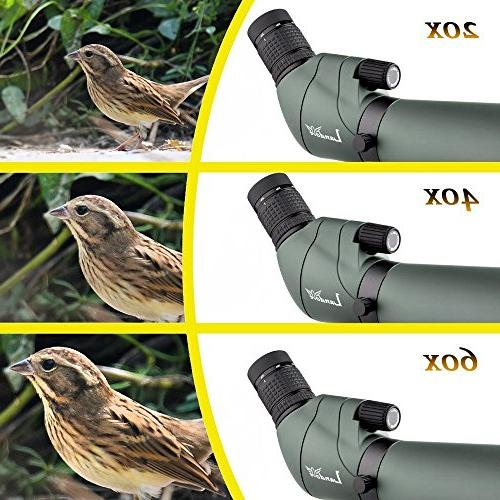 20-60X Prism Birdwatching & Digiscoping The Beauty Screen